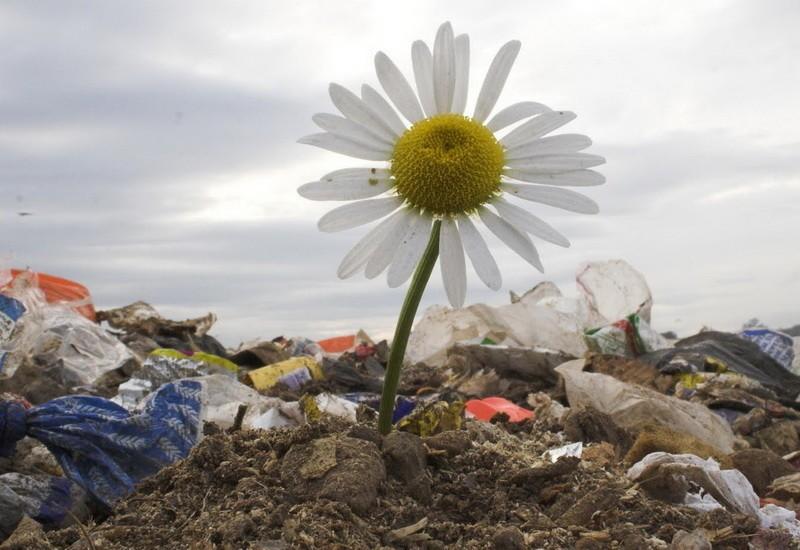 deponija-cvet.jpg